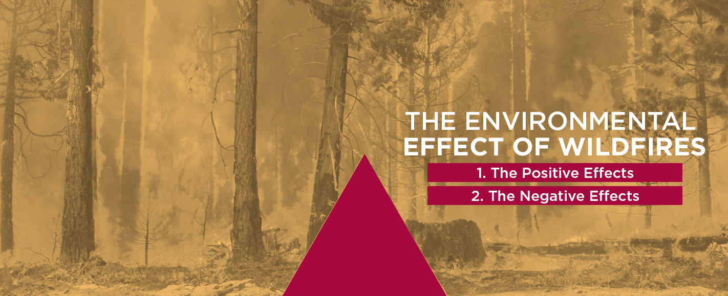 the environmental effects