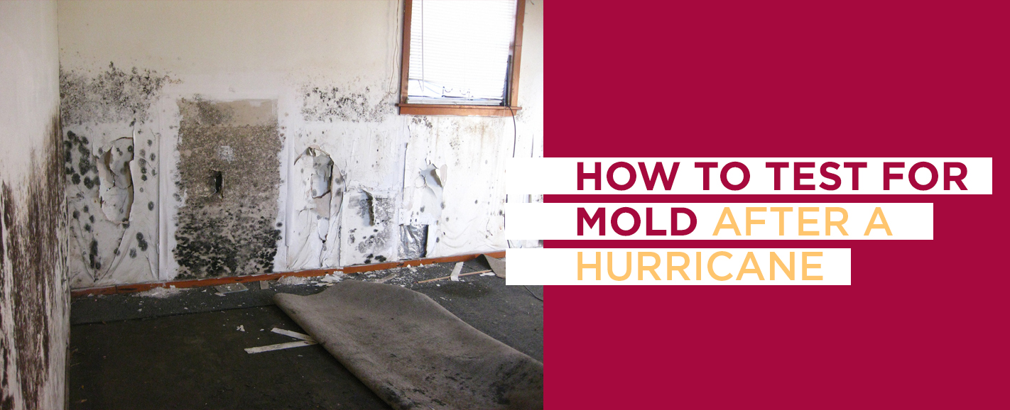 How to test for mold after a hurricane